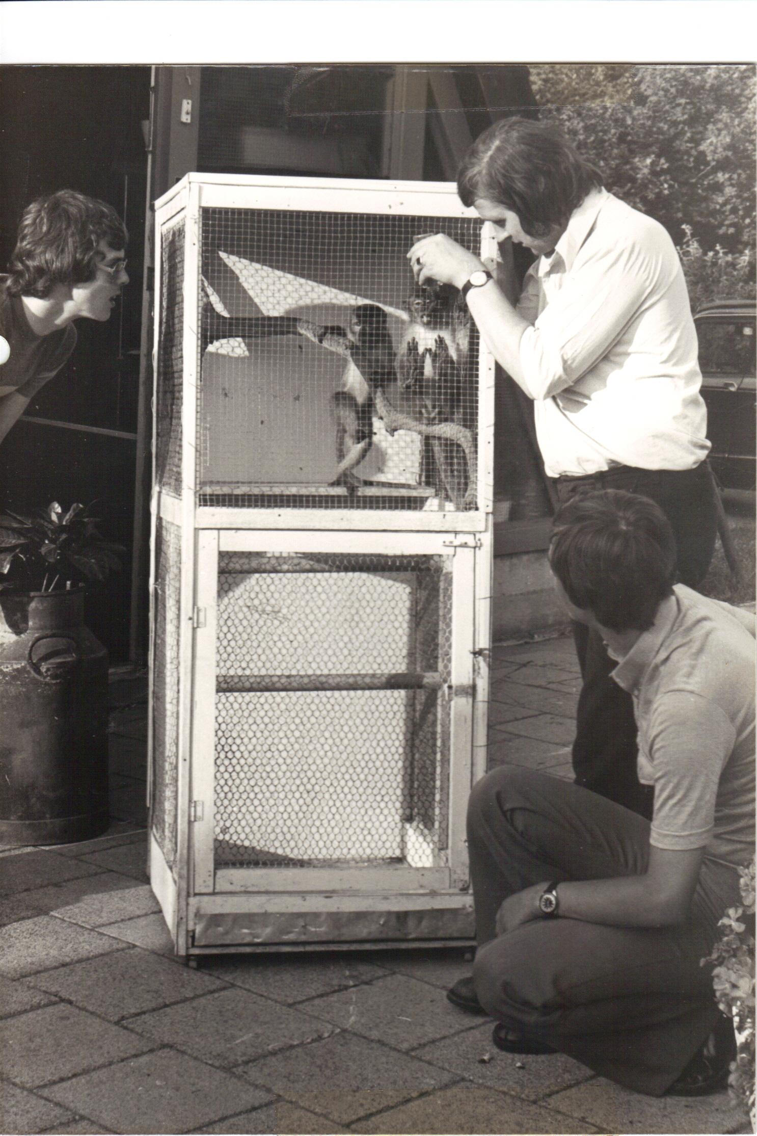 1976 Java Apen