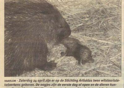 2004-geboorte-stekelvarkens-de-haarlemmer-06-05-2004